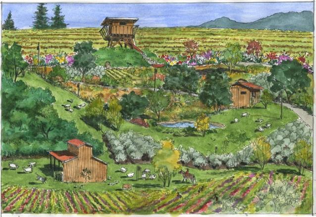 Dolan's biodynamic farm, including vineyard. Image courtesy of PaulDolan.